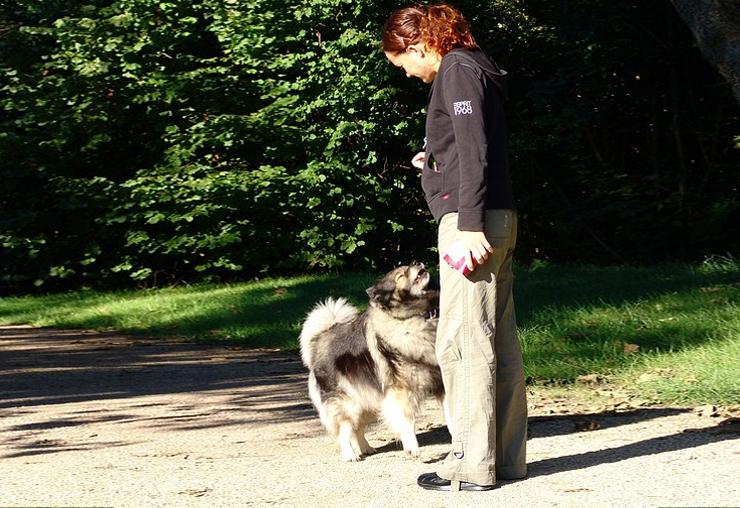 Quitter son métier pour devenir éducateur canin