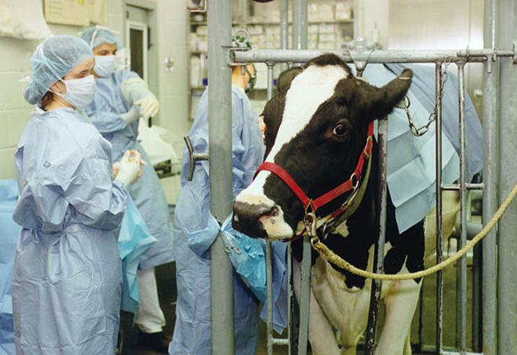 Connaissez-vous vraiment le métier de vétérinaire ?