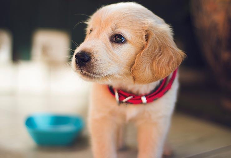 Nouveau métier de câlineur pour chiens au Canada