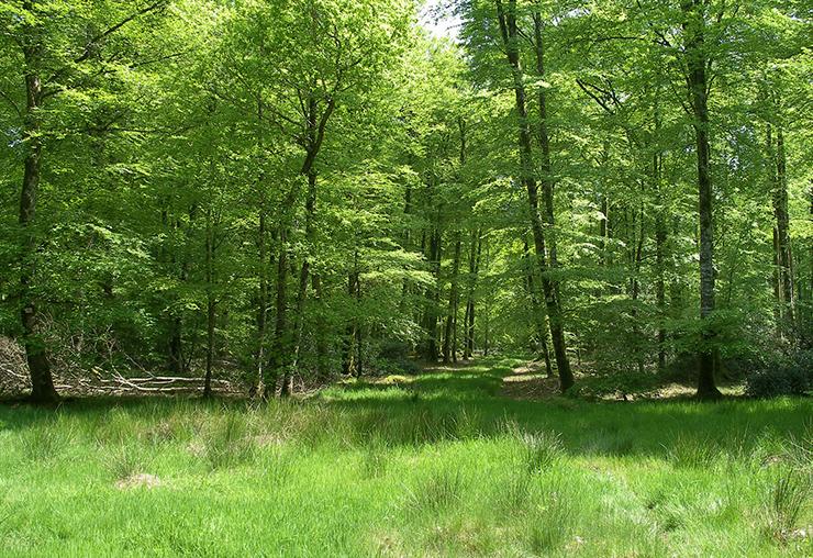 Eco-gestionnaire : participez à la transition écologique de quartier