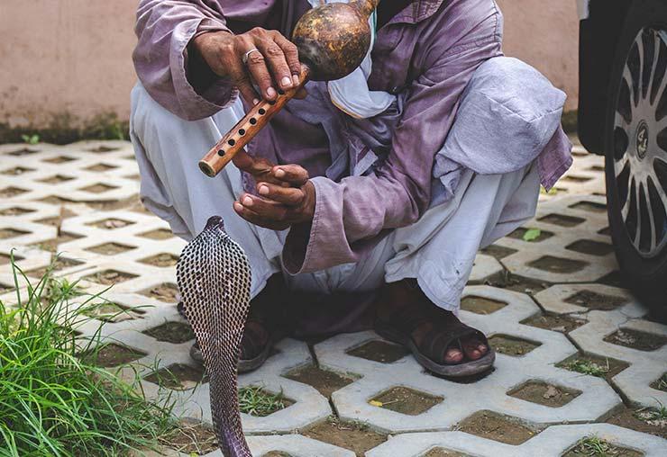 Attrapeur de serpent en inde