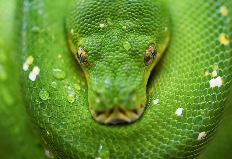 Attrapeur de serpents : un métier en plein boom en Australie