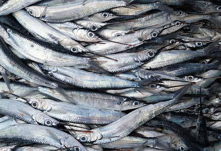 La vente de poisson, un métier passion pour Céline