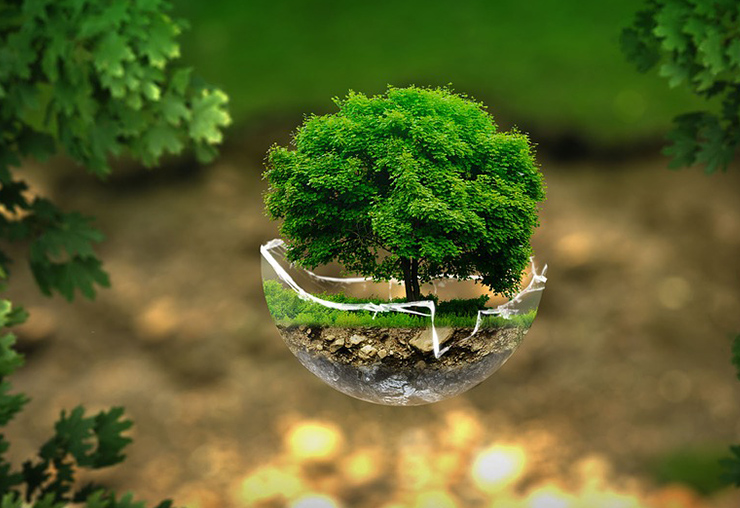 Un nouveau BTS sur les métiers de l'environnement
