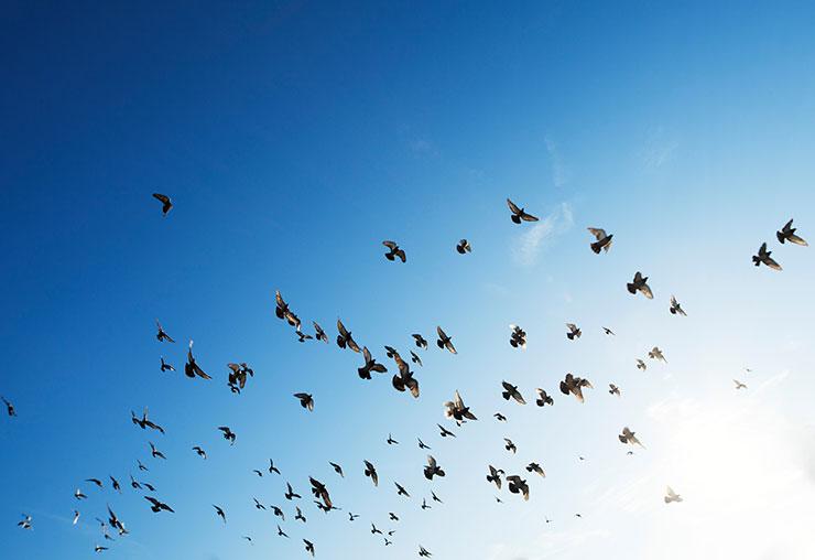 Effaroucheur d'oiseaux : un rôle clé à l'aéroport