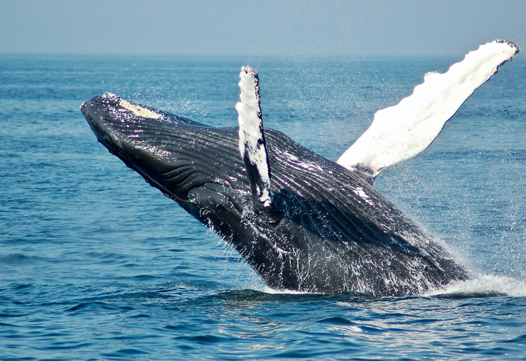 S'engager pour la protection des océans